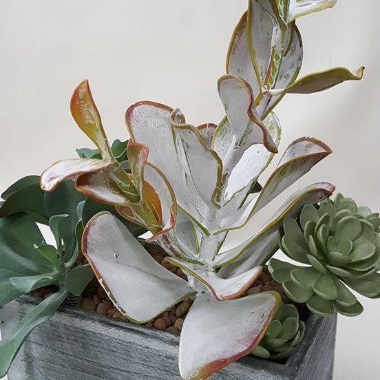 Seaside Succulent